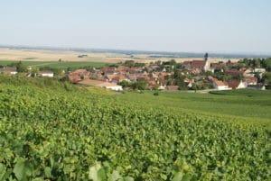 La Champagne et ses viticulteurs
